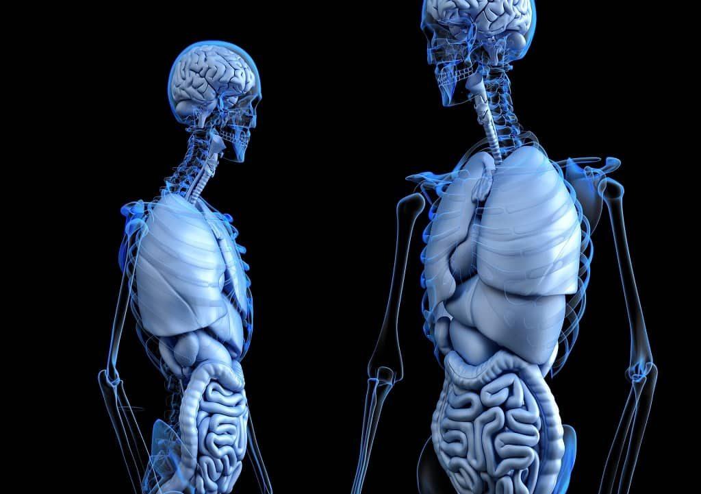 Basics Of Anatomy & Physiology   Anatomy - Physiology Notes