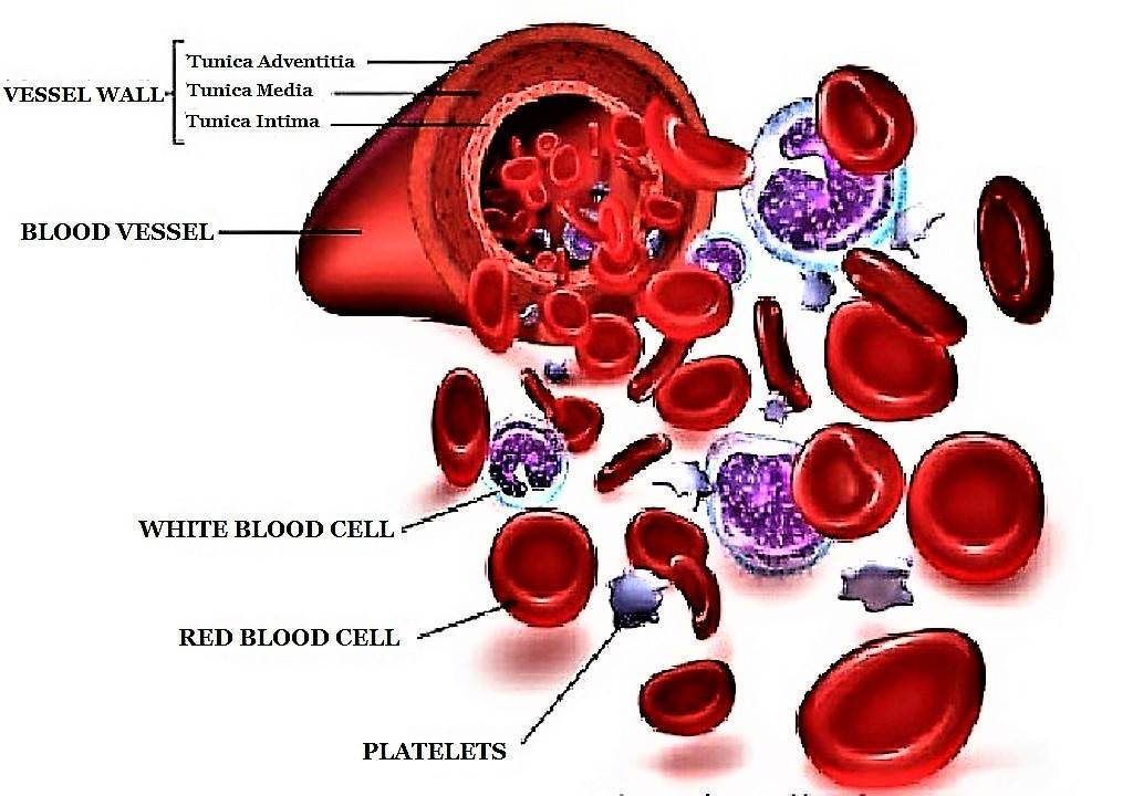 COMPOSITION OF BLOOD				    	    	    	    	    	    	    	    	    	    	5/5							(4)