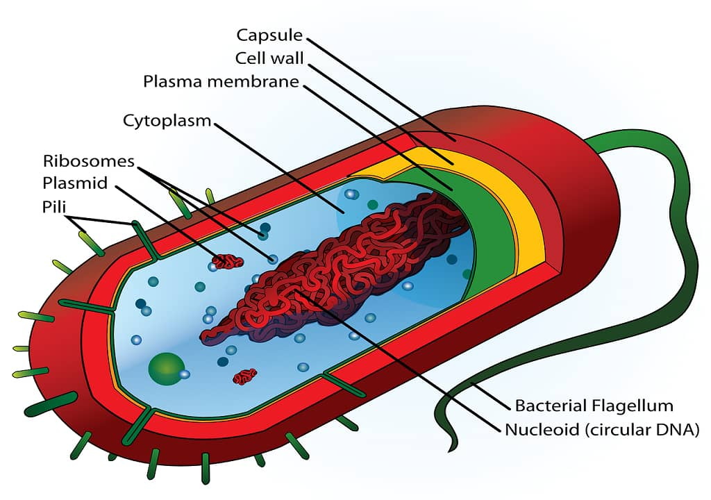 INTRODUCTION & STRUCTURE OF BACTERIA