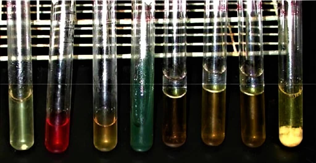 BIOCHEMICAL TESTS FOR STAPHYLOCOCCUS AUREUS - STAPH AUREUS BIOCHEMICAL TESTS - BIOCHEMICAL REACTIONS OF MICROORGANISMS