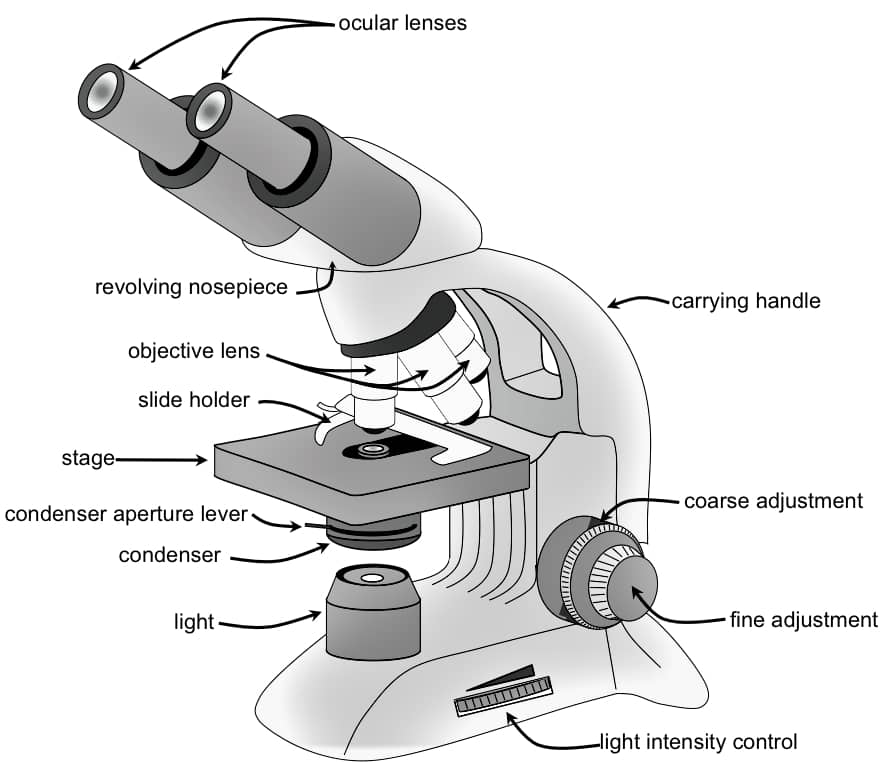 OPTICAL MICROSCOPE - COMPOUND MICROSCOPE - LIGHT MICROSCOPE