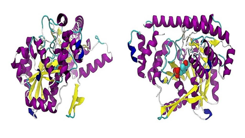 PROTEINS – THE BUILDING BLOCKS OF THE BODY                                        5/5(3)