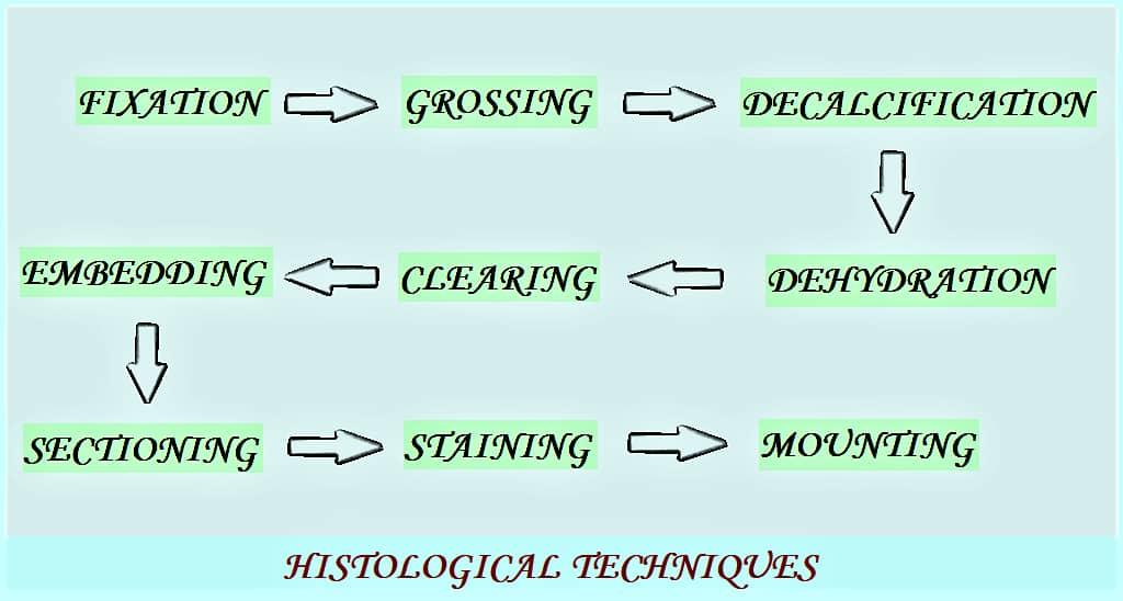 HISTOLOGICAL TECHNIQUES