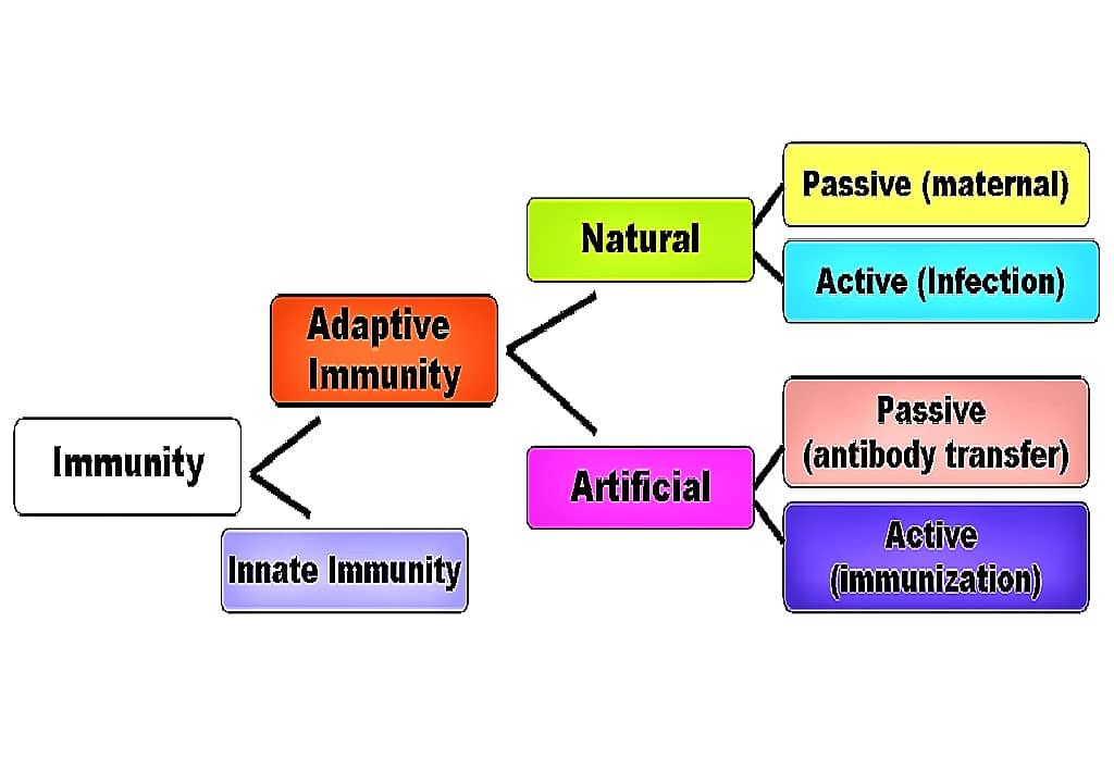 IMMUNITY - TYPES OF IMMUNITY