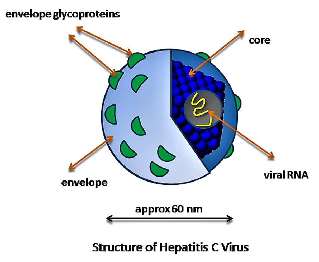 HEPATITIS C VIRUS (HCV) – MORPHOLOGY, TRANSMISSION, CLINICAL FEATURES & LABORATORY DIAGNOSIS
