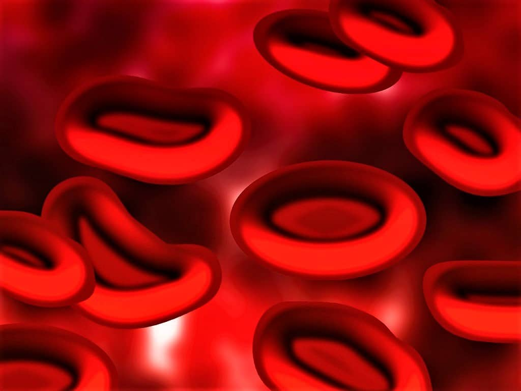 red cell indices - red cell index - red blood cells - mean cell volume - mcv - mean cell hemoglobin - mch - mean cell hemoglobin concentration - mchc