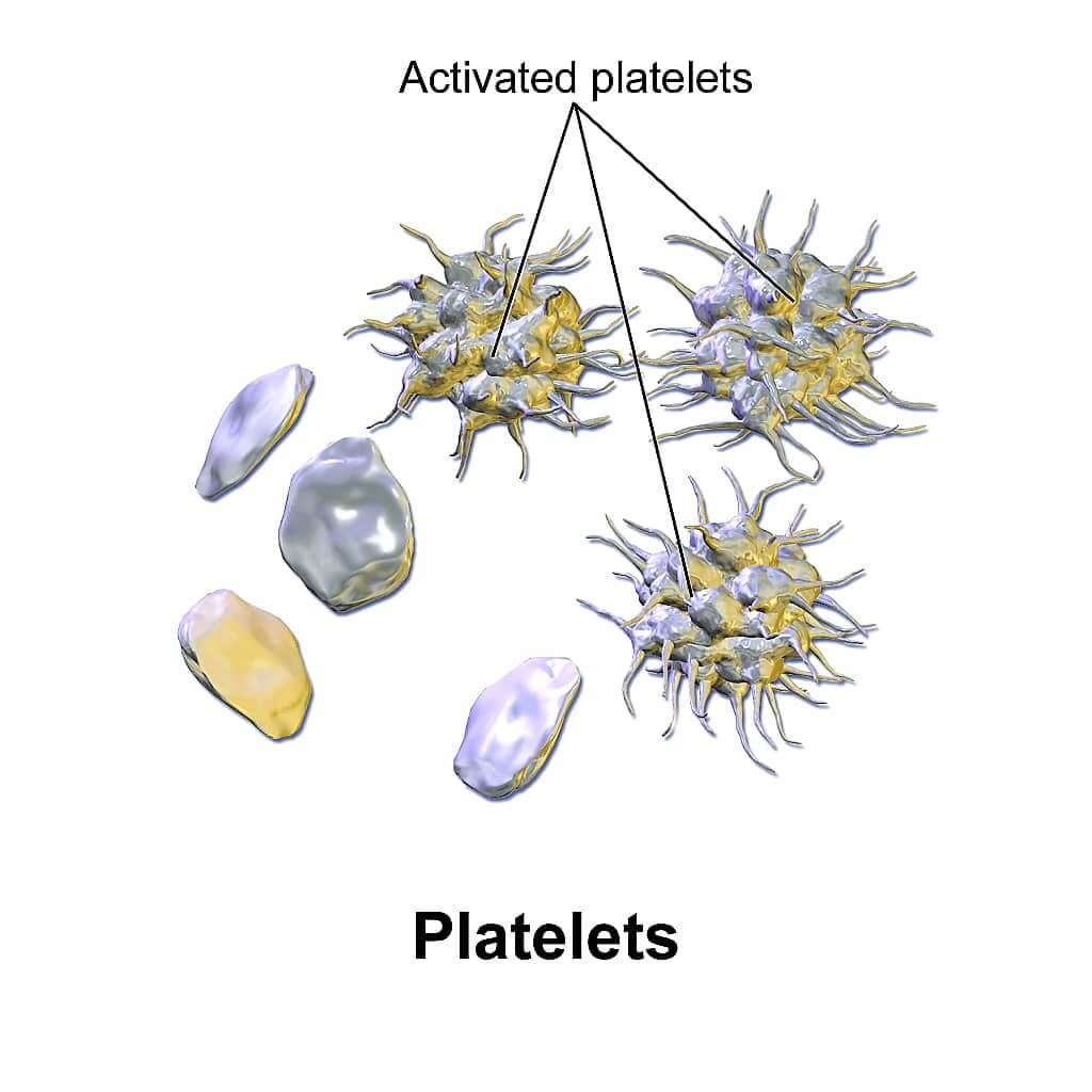 activated and inactivated platelets - activated platelets - inactivated platelets
