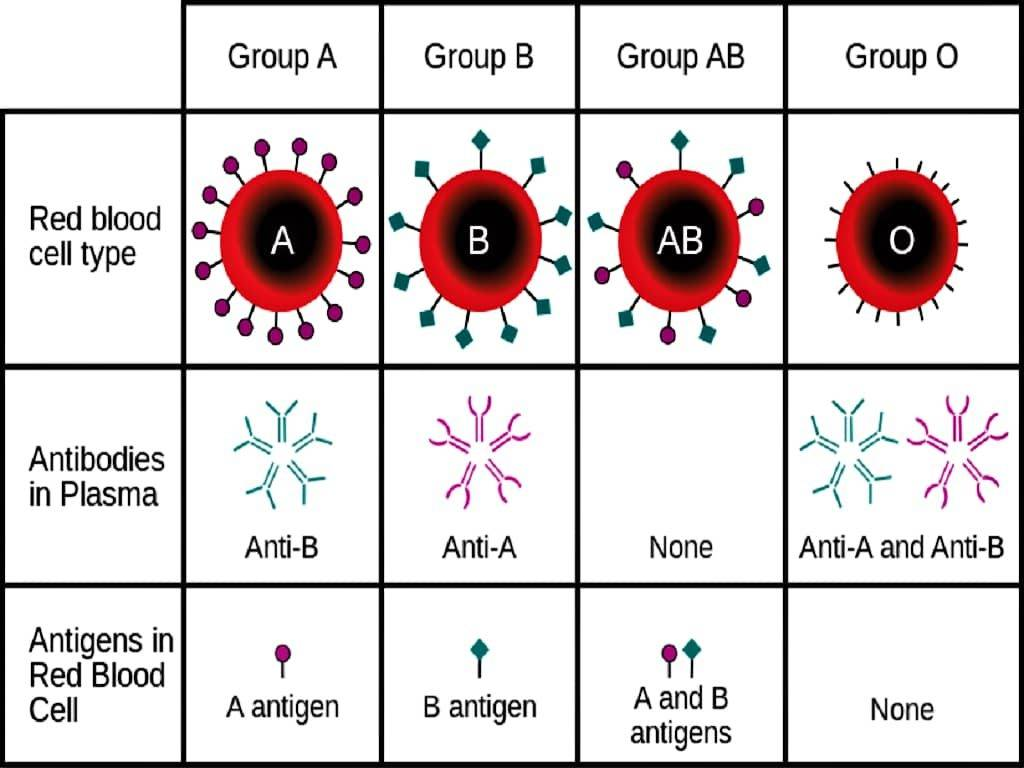ABO - ABO BLOOD GROUP - A QUIZ ON ABO BLOOD GROUP