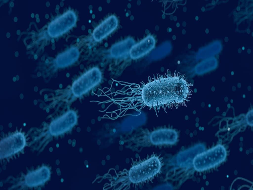 Basics Of Medical Microbiology A Quiz Medical Quiz