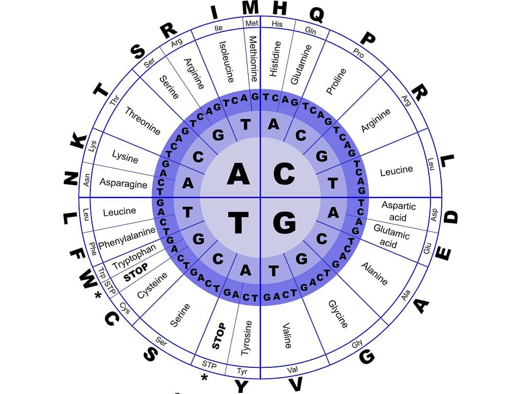 Nucleic Acids - Quiz 2 | Biochemistry Quiz | Medical Quiz